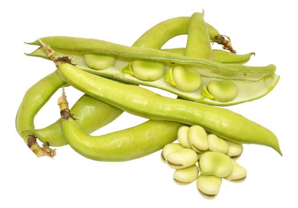 Fresh Pick of the Week: Fava Beans