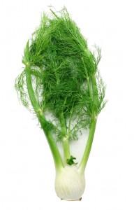 fennel2