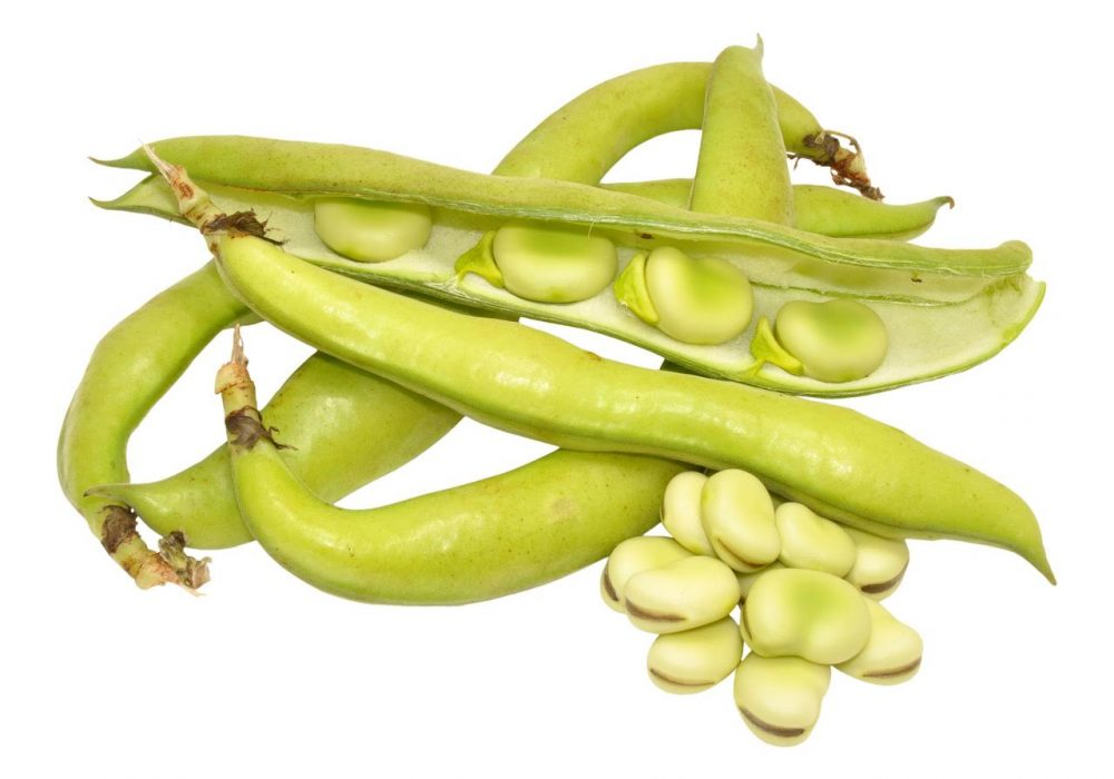 Fresh Pick of the Week: Fava Beans