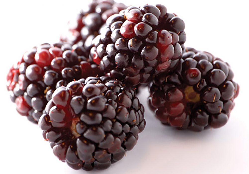 Fresh Pick of the Week: Boysenberries